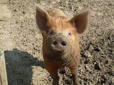 Baby Pigs In Mud Is not about pigs or dirt.