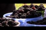 Owasso Blackberry Farm